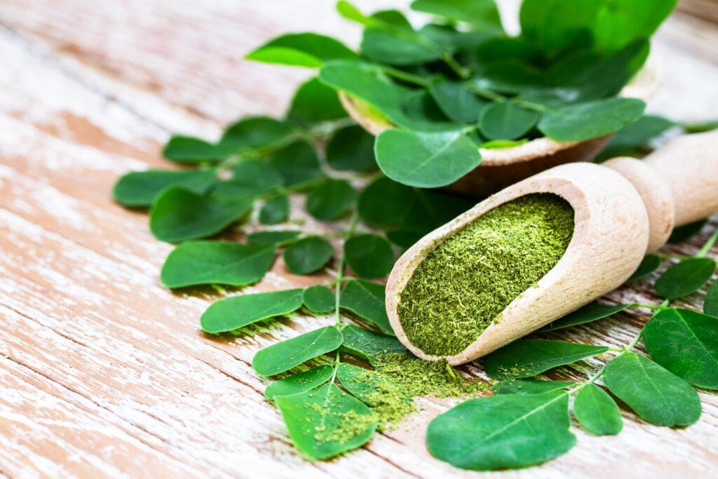 Moringa leaves and powder as natural galactagogues